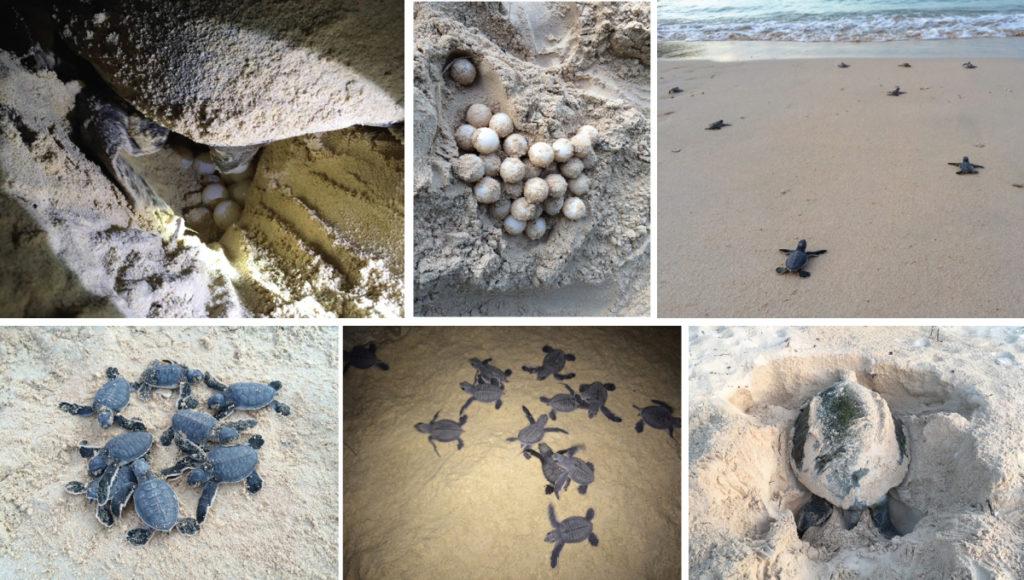 Xem-rùa-đẻ-trứng