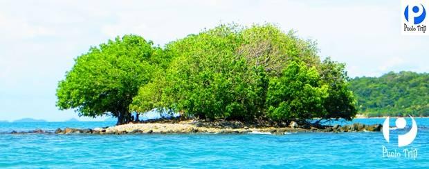 tour cần thơ đảo hải tặc giá rẻ